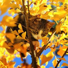 autumn-cat