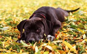 autumn-dog